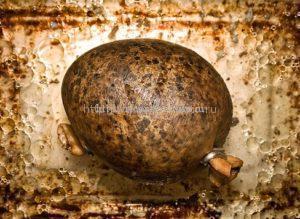 приготовить хаггис с картофелем
