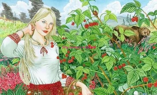 рисунок малины