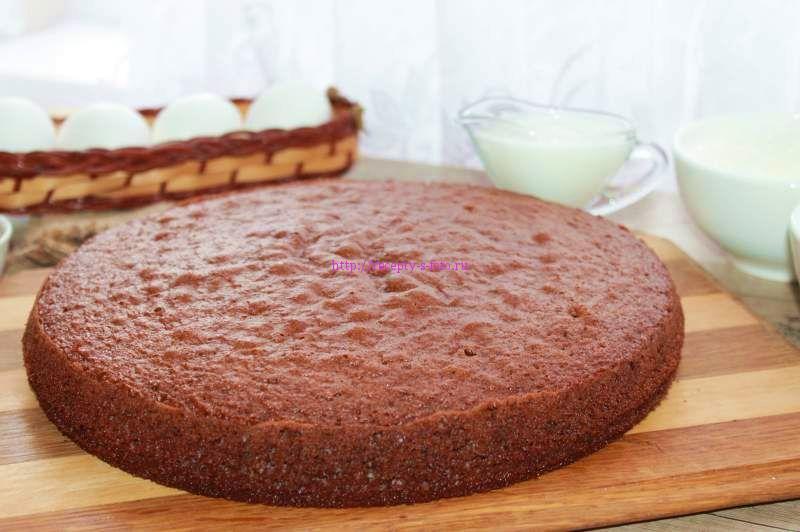 шоколадный корж бисквит